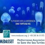 Medusas_TortugaP